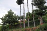 Λεόνογλου Αναστάσιος